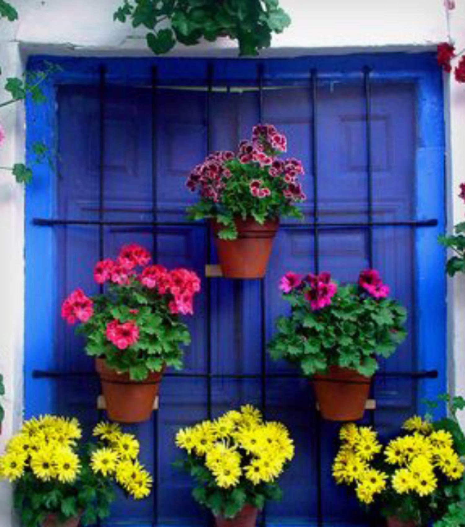 Resalta el encanto de tus ventanas usando plantas